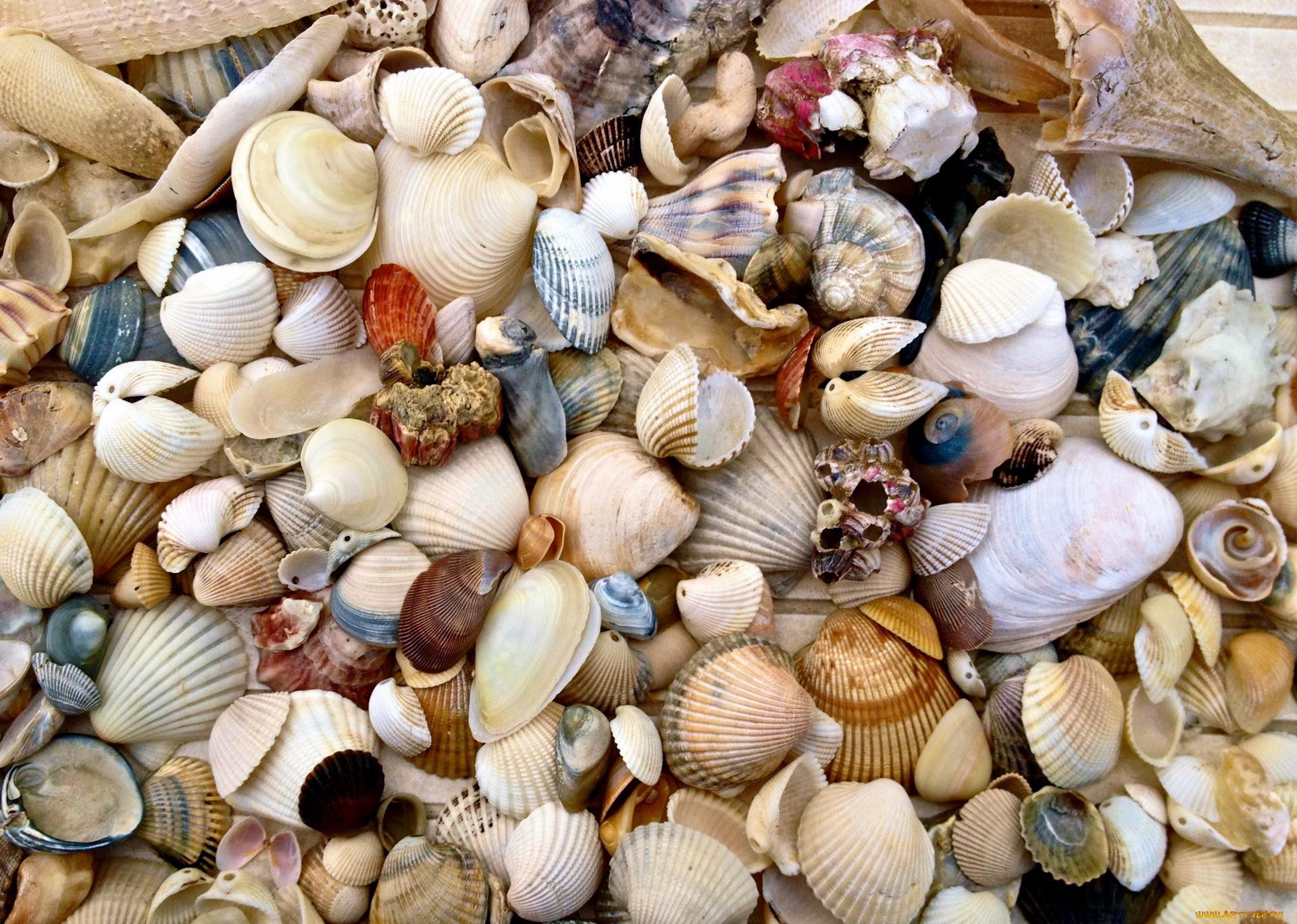 красивые картинки про море и ракушки побываем знаменитой лавке
